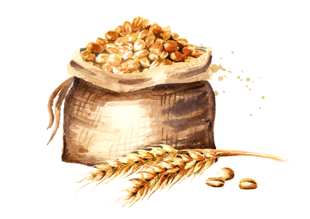 Ears of wheat and Sack of grain. Watercolor hand drawn illustration, isolated on white background Stock Photo