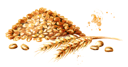 Wheat ear and a bunch of grain. Watercolor hand drawn illustration, isolated on white background Stock Photo