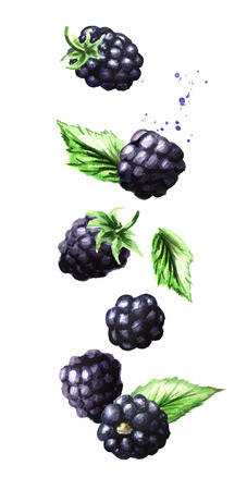 Falling ripe berries blackberry, vertical composition. Watercolor hand drawn illustration,  isolated on white background Foto de archivo