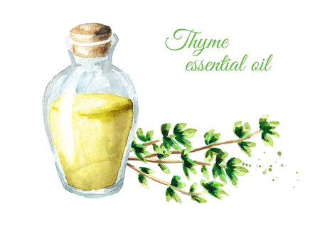 Thyme essential oil. Watercolor hand drawn illustration, isolated on white background