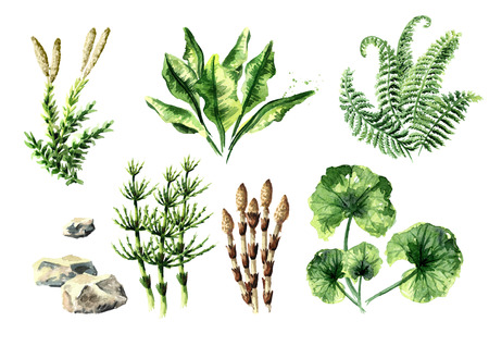 Prehistoric plants collection. Watercolor hand drawn illustration, isolated on white background