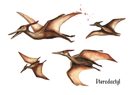 Pterodactyl dinosaur. Watercolor hand drawn illustration, isolated on white background