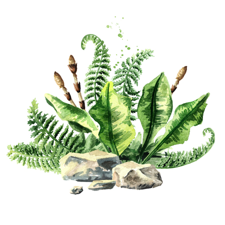 Prehistoric plants composition, watercolor hand drawn illustration, isolated on white background Stock Photo