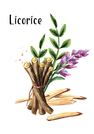 Licorice flower, leaf and root vertical composition. Medical herbs and plants. Watercolor hand drawn illustration isolated on white background
