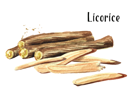 Licorice roots composition. Watercolor hand drawn illustration isolated on white  background