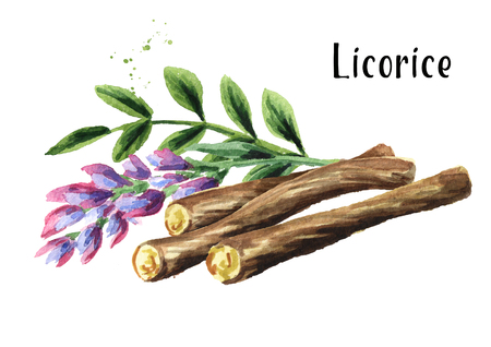 Licorice roots with flower and leaves. Watercolor hand drawn illustration isolated on white background