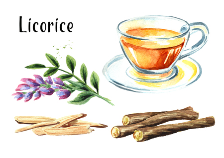 Licorice tea, flower and root set, concept of healthy drink. Watercolor hand drawn illustration isolated on white background Stock Photo