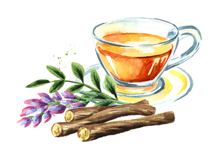 Licorice tea, flower and root, concept of healthy drink. Watercolor hand drawn illustration isolated on white background