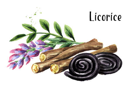 Liquorice roots with flower and Licorice wheels candies. Watercolor hand drawn illustration isolated on white background