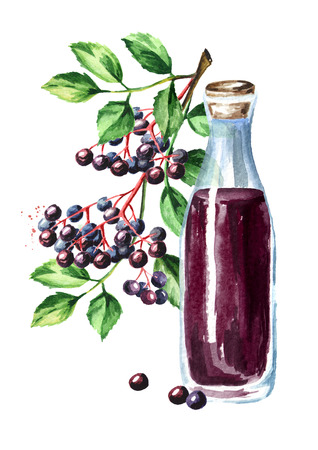 A bottle of elderberry syrup with elder brunch. Watercolor hand drawn illustration, isolated on white background Stok Fotoğraf