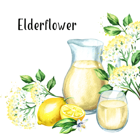 Jug and glass with Homemade elderflower syrup, summer drink, with elder flower and lemon. Watercolor hand drawn illustration, isolated on white background