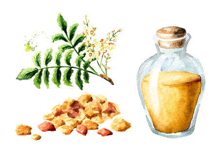 A bottle of frankincense essential oil with frankincense resin and boswellia leafes and flowers set. Watercolor hand drawn illustration,  isolated on white background Stock Photo