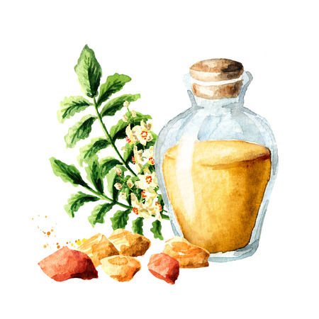A bottle of frankincense essential oil with frankincense resin and boswellia leafes and flowers. Watercolor hand drawn illustration, isolated on white background Stock Photo