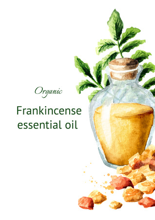 A bottle of frankincense essential oil with frankincense resin and boswellia leafes. Watercolor hand drawn illustration, isolated on white background