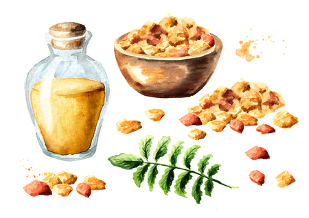 Frankincense resin set with bottle of essential oil and boswellia leaf. Watercolor hand drawn illustration, isolated on white background