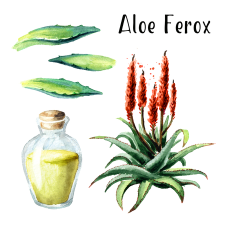 Aloe Ferox set. Watercolor hand drawn illustration  isolated on white background
