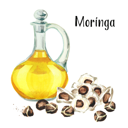 Glass jug of Moringa or Behen Oil, and seeds of the Moringa tree. Watercolor hand drawn illustration, isolated on white background Stock Photo