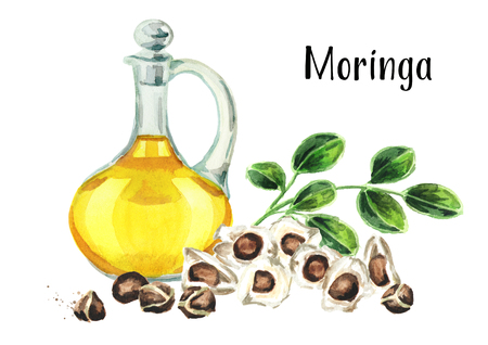 Glass jug of Moringa or Behen Oil, leaves and seeds of the Moringa tree. Watercolor hand drawn illustration, isolated on white background Фото со стока