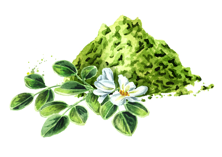 Herbal Moringa leaves and flowers with powder. Superfood. Watercolor hand drawn illustration  isolated on white background