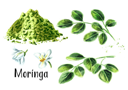 Herbal Moringa leaves with powder and flowers set. Superfood. Watercolor hand drawn illustration  isolated on white background