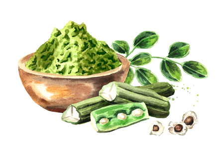 Herbal Moringa leaves with powder and pods. Superfood. Watercolor hand drawn illustration  isolated on white background