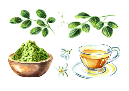 Herbal Moringa set. Watercolor hand drawn illustration, isolated on white background
