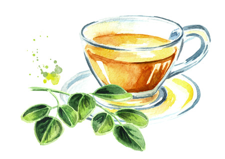 Herbal Moringa tea. Superfood. Watercolor hand drawn illustration  isolated on white background