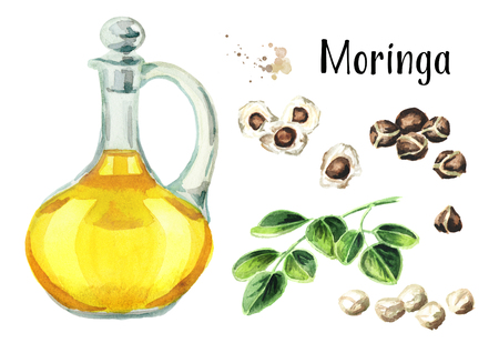 Moringa or Behen Oil set. Watercolor hand drawn illustration, isolated on white background