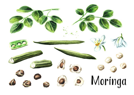 Moringa plant set. Watercolor hand drawn illustration, isolated on white background Stock Photo