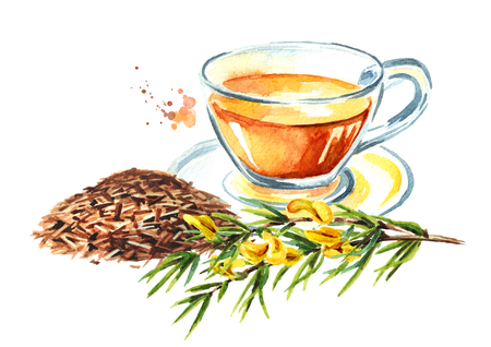 Branch of the rooibos plant. Watercolor hand drawn illustration isolated on white background Stock Photo