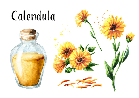Calendula marigold tincture set with fresh calendula flowers and glass bottle. Watercolor hand drawn illustration,  isolated on white background Stock Photo