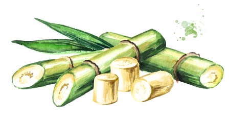 Sugar cane composition. Watercolor hand drawn illustration isolated on white background
