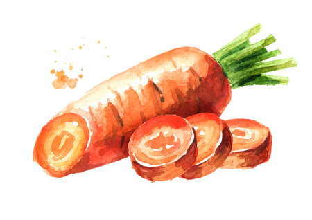 Fresh carrot with cut pieces. Watercolor hand drawn illustration,  isolated on white background Stock Photo