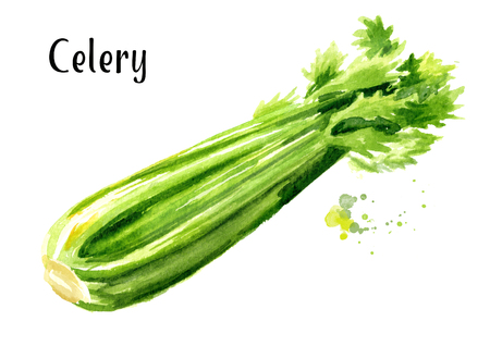 Fresh green celery. Watercolor hand drawn illustration  isolated on white background 版權商用圖片 - 112581463
