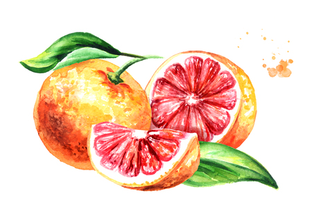 Fresh juicy grapefruit with half, slice and leaf. Watercolor hand drawn illustration, isolated on white background