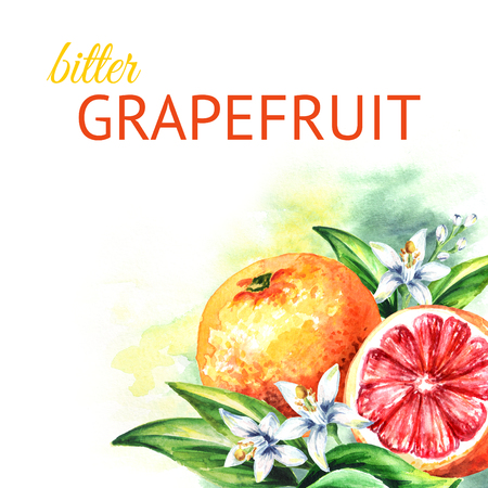 Grapefruit  background. Watercolor hand drawn illustration Фото со стока