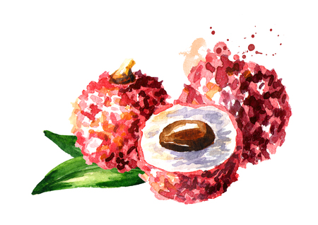 Fresh lychee fruits. Watercolor hand drawn