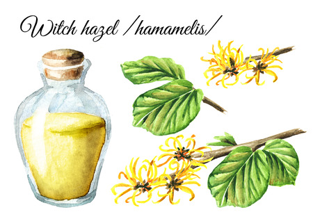Witch hazel with leaves, flowers and tincture set, medicinal plant Hamamelis. Watercolor hand drawn illustration, isolated on white background