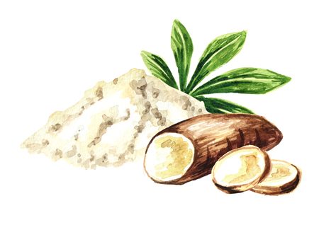 Cassava root, powder. Manihot esculenta. Watercolor hand drawn illustration, isolated on white background