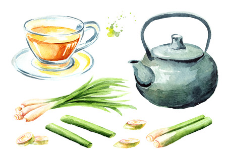 Herbal tea with lemongrass. Teapot, glass cup, plant slices. Watercolor hand drawn illustration  isolated on white background