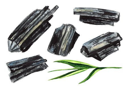 Natural wood charcoal with green stem set. Watercolor hand drawn illustration  isolated on white background