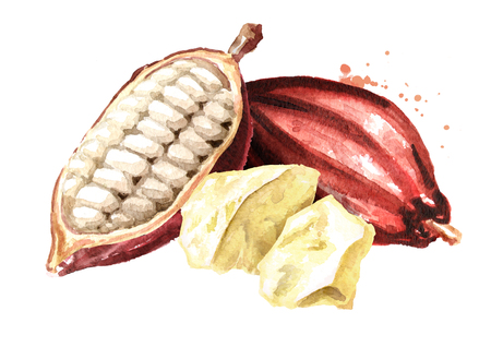 Cocoa butter with Cocoa pods. Watercolor hand drawn illustration, isolated on white background