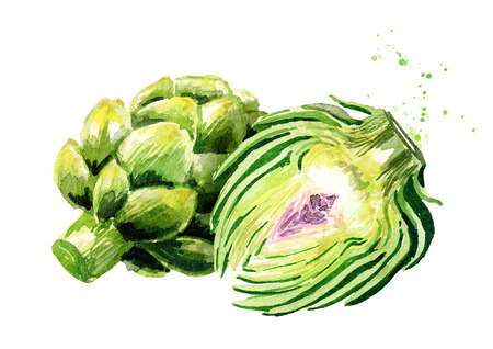 Fresh artichoke and cut half. Watercolor hand drawn illustration,  isolated on white background