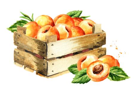 Box with ripe apricots. 스톡 콘텐츠