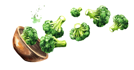 Bowl with fresh broccoli. Hand drawn horizontal watercolor illustration, isolated on white background Stok Fotoğraf