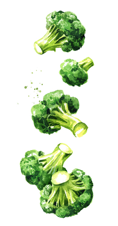 Fresh broccoli blocks. Hand drawn watercolor vertical illustration  isolated on white background Stock Photo