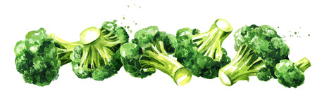 Fresh broccoli. Hand drawn horizontal watercolor illustration, isolated on white background