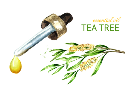 Tea tree essential oil drop. Medicinal  and cosmetics plant. Watercolor hand drawn illustration, isolated on white background