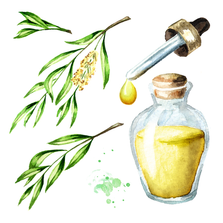 Tea tree essential oil set. Medicinal  and cosmetics plant, Watercolor hand drawn illustration isolated on white background