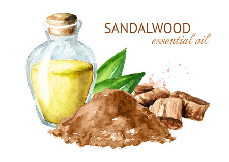 Sandalwood or  Chandan essential oil. Watercolor hand drawn illustration isolated on white background